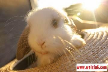 网络热门的兔年可爱兔子图片素材_tu年快乐