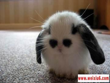 网络热门的兔年可爱兔子图片素材